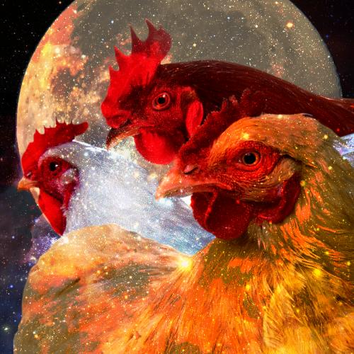 Chicken Girl Three Chicken Moon
