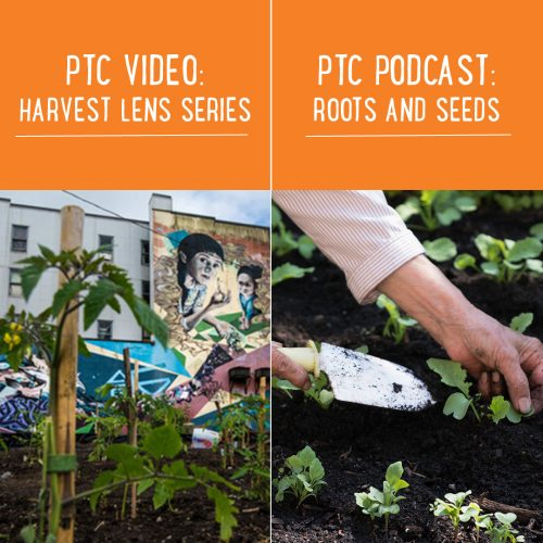 Harvest Lens and Roots and Seeds Instagram