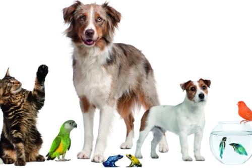 A group of animals including dog, cat, rabbit, snake, fish, birds, etc